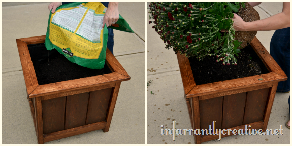 planting_mums_in_cedar_planter
