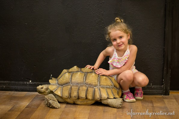 kayla-and-the-tortoise