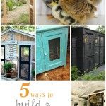 5-Ways-Build-Backyard-Chicken-Coop